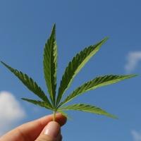 Curios din fire? Iata cateva lucruri despre cannabis pe c...